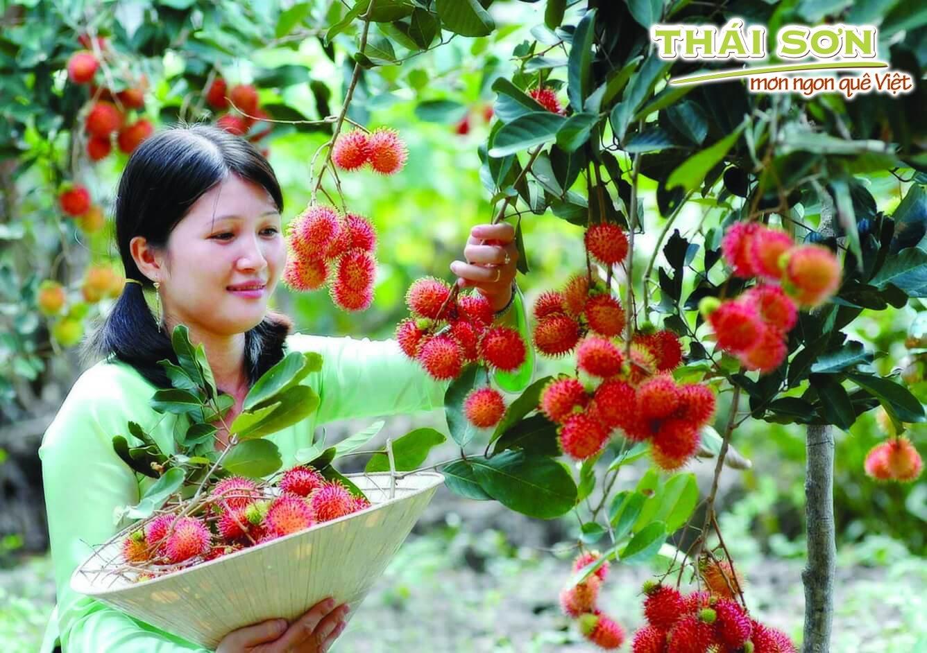 Món-Ngon-Quê-Việt–Tìm-Vui-Một-Chốn-Quê-03
