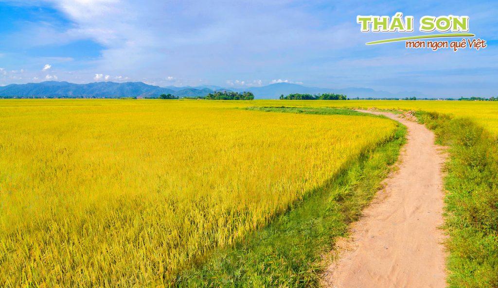 Sữa Bắp Thái Sơn – Thăm Xứ Hoa Vàng Với Cỏ Xanh 02